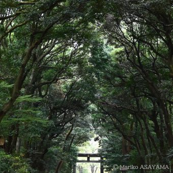"Meiji Jingu Forest Festival of Art Symposium: ""One Hundred Year Forest, and Art"""